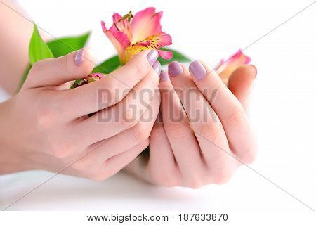 Hands Of A Woman With Pink Manicure On Nails And Flowers Alstroemeria On A White Background