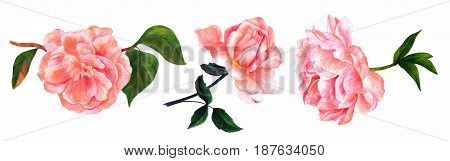 Vintage style watercolors of pink peony, rose, and camellia flowers, on branches with green leaves, isolated on white background, set of decorative elements for greeting card or wedding invitation