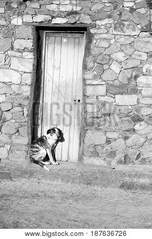 Near A House The  Dog  Waiting Alone