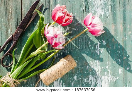 Bouquet of tulips scissors and twine on an old vintage wooden board.