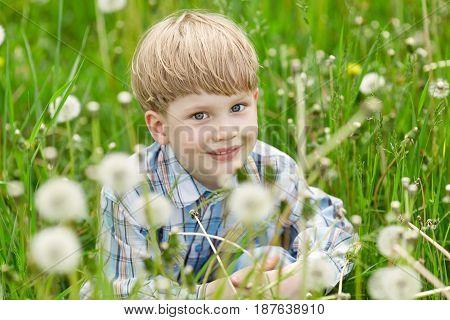 Little Blond Boy Sitting In A Meadow Of Dandelions