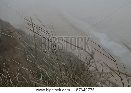 Background steep seascape of the Black Sea in dense fog and wild grass in the foreground
