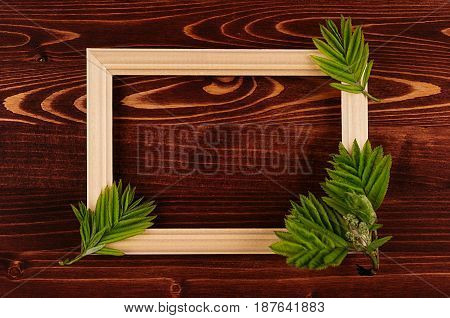 Decorative summer background of blank wood frame and young green leaves on vintage brown wooden board. Copy space top view.