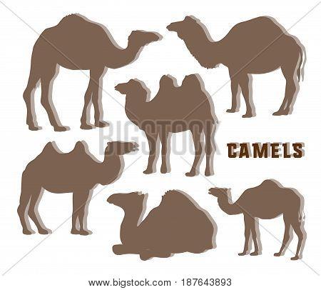 Camel Silhouettes set. Vector illustration EPS 10
