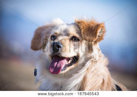 Handicapped dog posing for a portrait photo