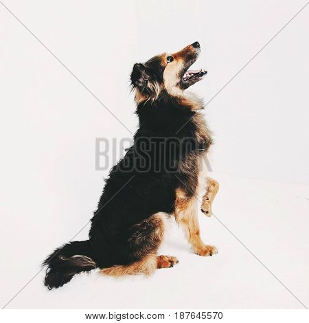 Beautifully posing for a purebred girl in photography
