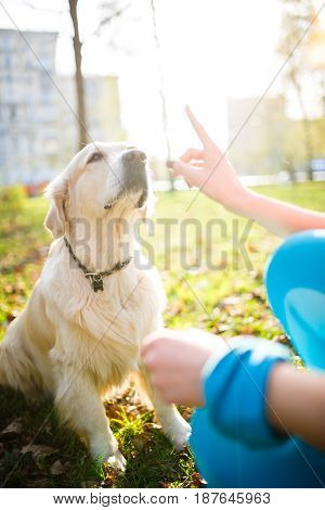 Girl training dog in collar on lawn in spring