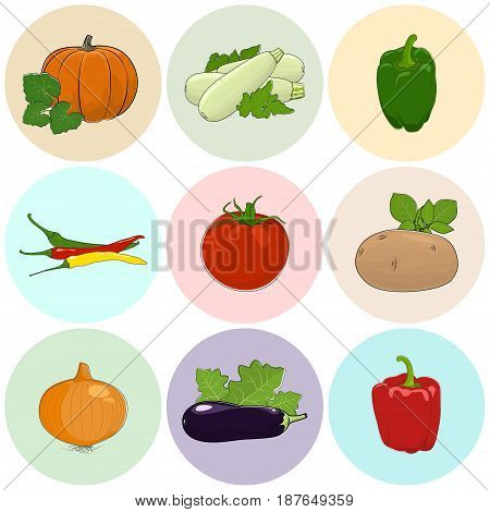 Round Colored Icons Vegetables, Tomato, Onion and Potato, Green and Red Sweet Pepper, Icons Zucchini Courgette and Hot Pasilla Chile Pepper, Pumpkin with White Cabbage, Eggplant, Vector Illustration