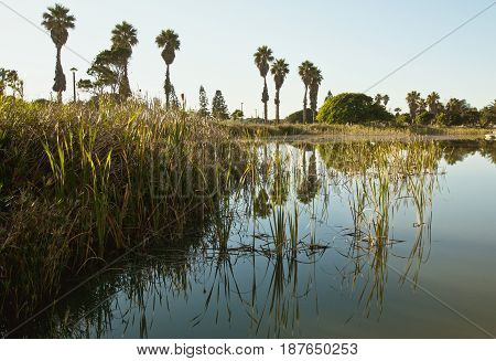 tranquil nature scene of reeds and water at sunrise