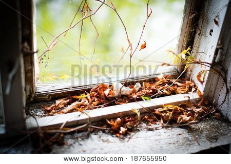 Abandoned Home With Old Leaves In The Window Frame