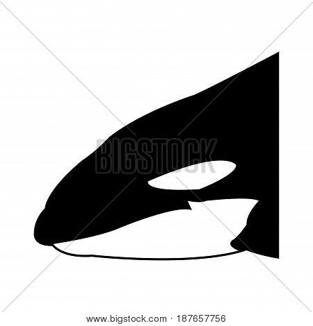Killer whale illustration, vector, whale, cetacea, animal, aquatic animals, orca