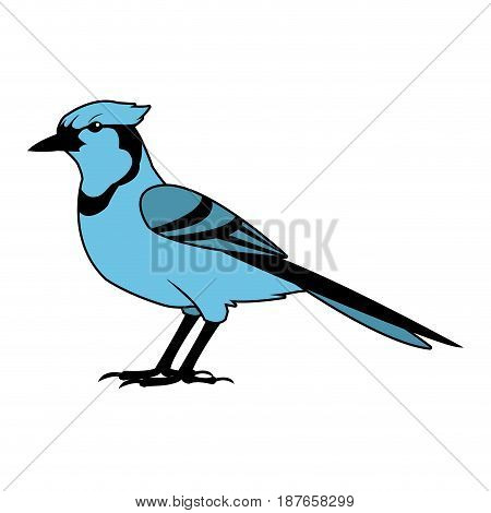 bird natural feather fauna animal vector illustration