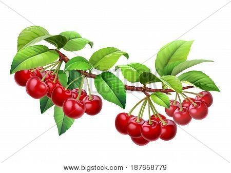 Cherry on a branch with leaves, png without background