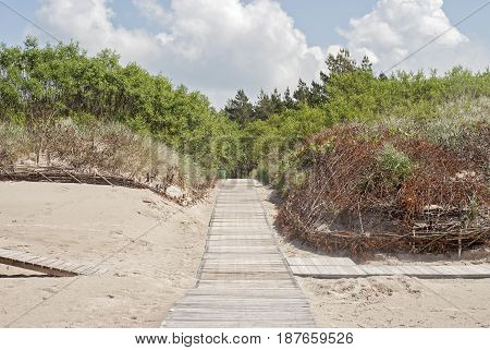 Wooden plank path at the beach, dunes and woods background