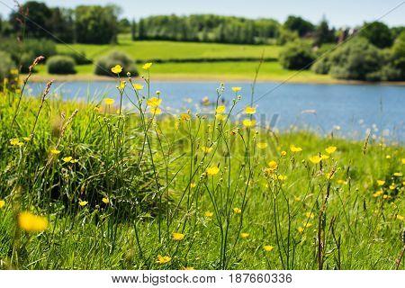 Bewl Water Reservoir, Lamberhurst, Kent, England