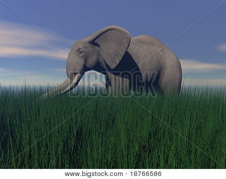 poster of elephant walking in green grass in the evening