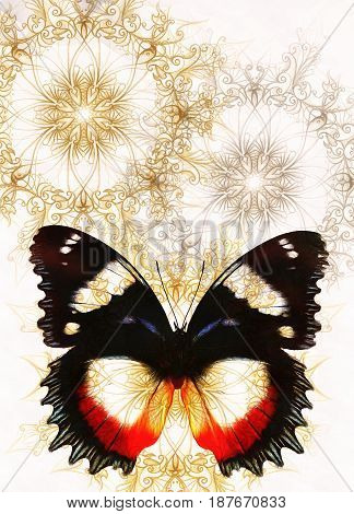 Color Butterfly with ornament and white background