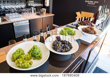 Wine grapes fresh off the vine available for tasting in the Mornington Peninsula, Victoria, Australia