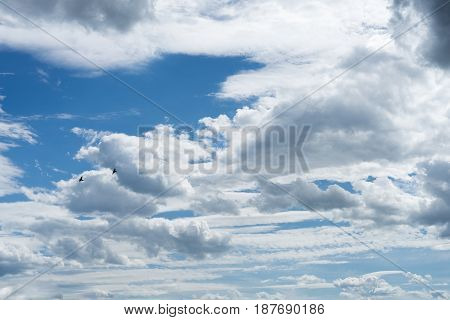Cloudy blue sky with two flying birds