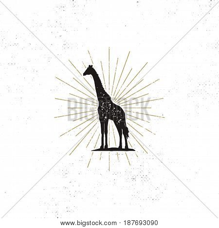 Hand drawn giraffe silhouette illustration. Vintage black giraffe with sunbursts isolated on white background. Good for tee shirt, clothing prints, mugs, travel pennant designs. Stock vector