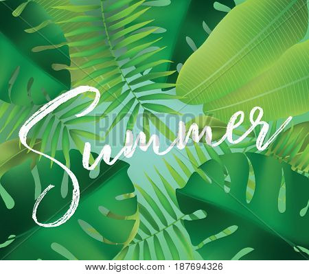 Summer. Vector background with typography for posters and banners. Illustration with tropical leaves and sun.