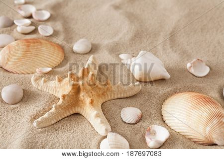 Sea beach sand background with seashells and starfish top view. Natural seashore textured surface
