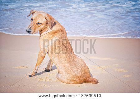 Dogs play beach front beach sea sky good weather.