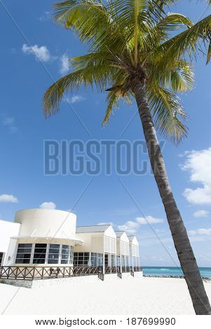 The leaning palm over Lucaya beach in Freeport town on Grand Bahama island.