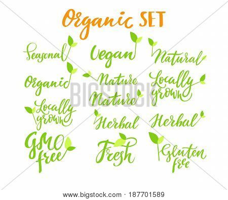 Eco set: hand drawn logos, labels with green leaves. Vector illustration eps 10 for food, drink, restaurants, menu, markets, organic products, package Brush lettering calligraphy