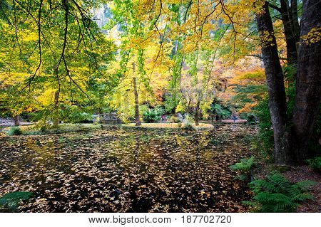 Alfred Nicholas Memorial Gardens on a warm sunny autumn day in the Dandenongs, Victoria, Australia