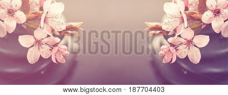 Beautiful pink Spa Flowers on Spa Hot Stones on Water Wet Background. Side Composition. Copy Space. Spa Concept. Dark Background. Toning.