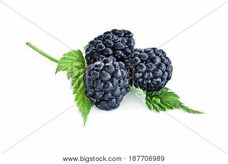 Juicy raw blackberry fruit with leaves isolated over a white background with light shadow. Shallow depth of field with selective focus on foreground.