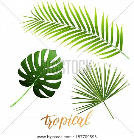 Tropical leaves of monstera, coconut palm, fan palm. Trendy palm leaves set