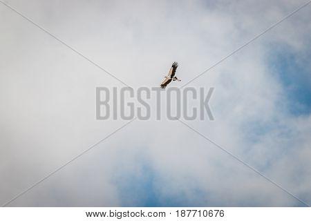 Flying Secretary Bird In The Kgalagadi.