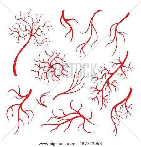 Human eye veins or vessel, red capillaries, blood arteries isolated set.