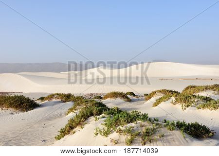 Big white sand dunes at Aomak beach at sunset Socotra island Yemen. The protected area of Aomak beach Gulf of Aden Arabian Sea center of unique biodiversity