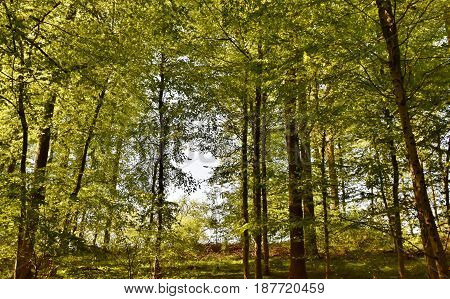 Landscape with spring green beech trees in sunlight