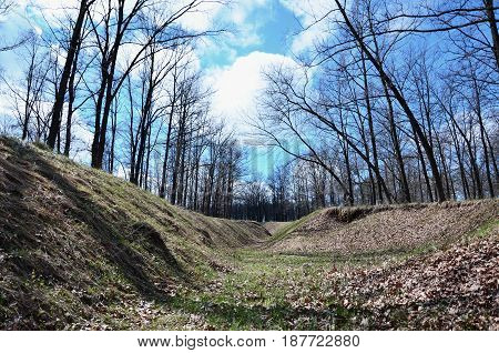 Spring Landscape With A Deep Ravine Filled With Fallen Leaves Surrounded By A Lot Of Trees On The Ed