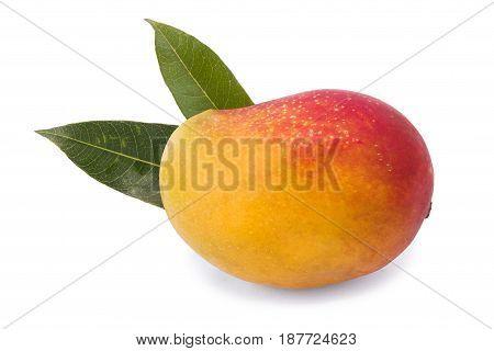 Fresh juicy mango fruit isolated on the white background. No people. Organic  exotic  tropical fruit. Organic fruit concept.