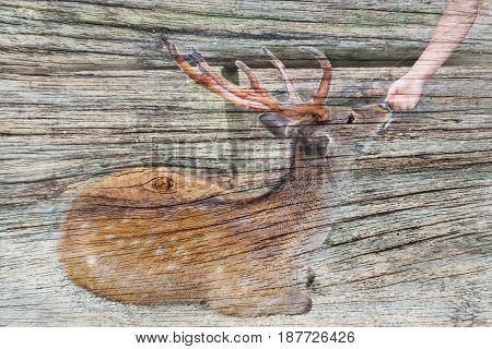 Overlay the friendship between tourist and deer on old wood background