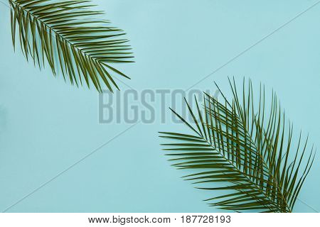 Palm leaves in the corners