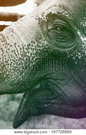 Closeup Shot Elephant Open Mouth