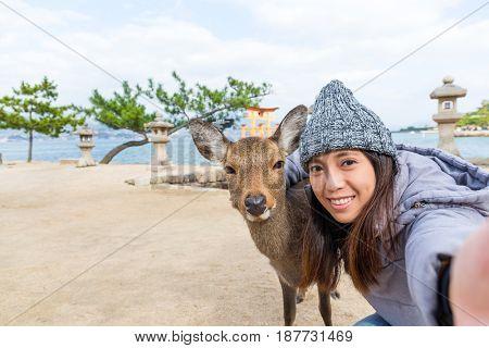 Woman taking photo with deer in miyajima of Japan