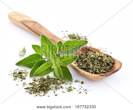 Oregano spices dry and fresh