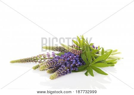 Bouquet purple Lupine isolated over white background