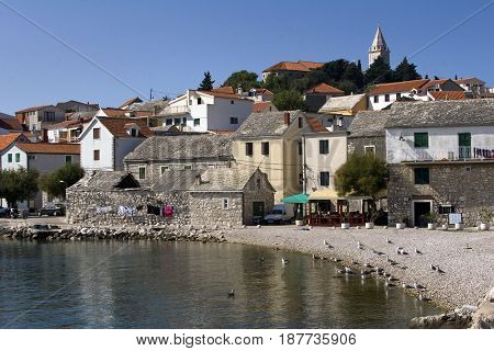 Seagulls on the beach in front of old houses in Primosten in Croatia