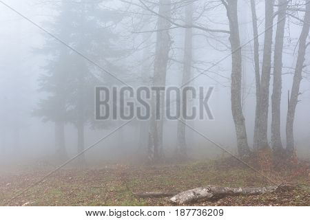 French countryside. Fog in mountains with trees in the foreground.