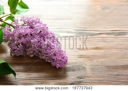 Beautiful branch of lilac flowers on wooden background