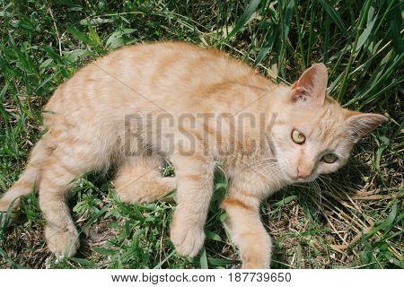 Playful cat in garden