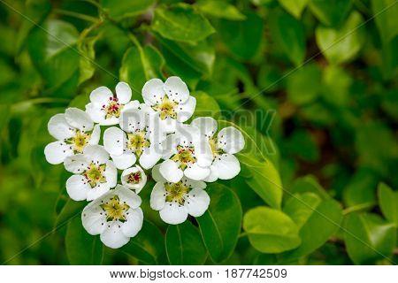 Nice spring blossom tree twig